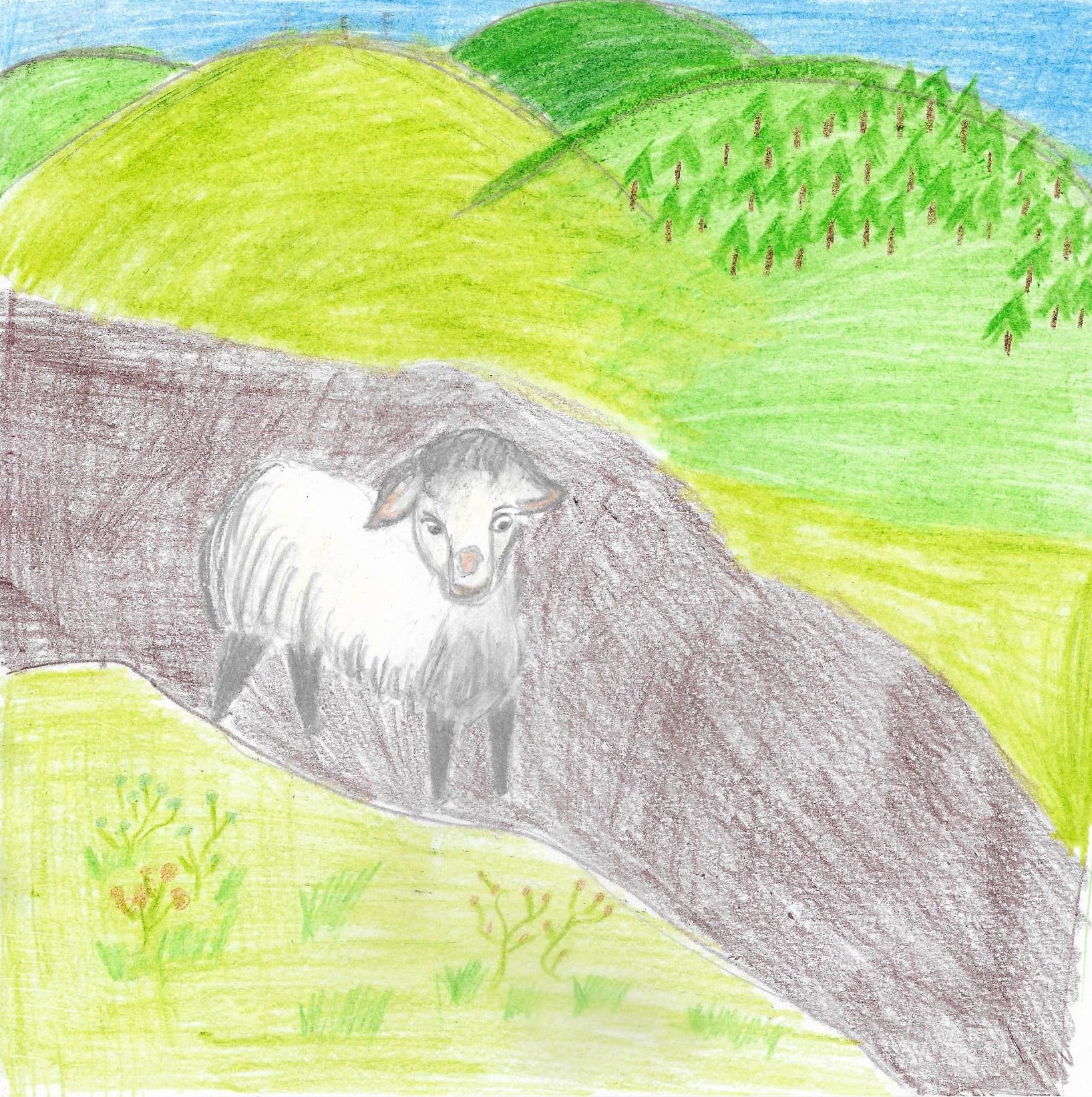 Niesforna owca